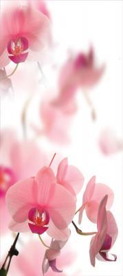 rozowe-storczyki-na-bialym-tle