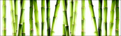 zielone-bambusy-na-bialym-tle