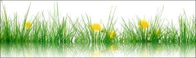 zolte-kwity-i-zielona-trawa