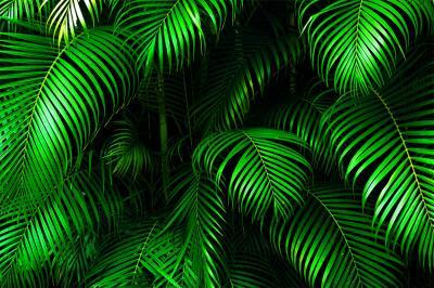 intensywnie-zielone-liscie-palmy