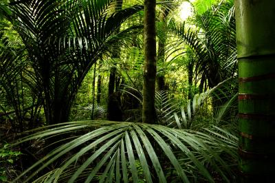 drzewa-i-dzungla