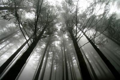 czarno-bialy-las