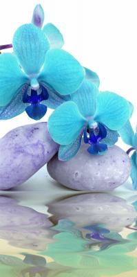 niebieskie-storczyki-na-kamieniach