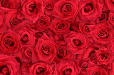 czerwone-roze