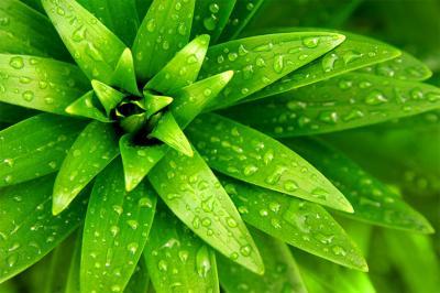 soczyscie-zielone-liscie-i-krople-wody