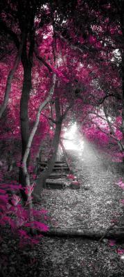 magiczny-rozowy-las