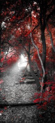 czerwone-drzewa-i-drewniane-schodki
