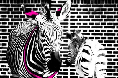 dwie-zebry-na-ceglanej-scianie
