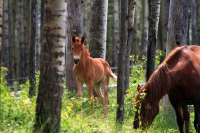 konie-na-lesnej-polanie