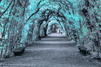 turkusowe-drzewa-w-parku