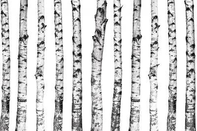biale-drzewa-na-sciane
