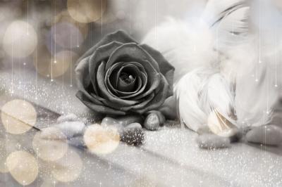 szara-roza