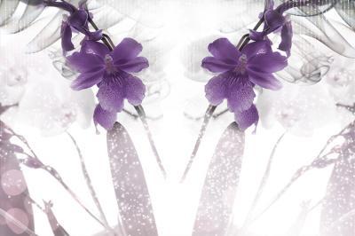 fioletowe-storczyki