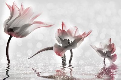tulipany-na-wodzie
