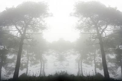 szare-drzewa-za-mgla