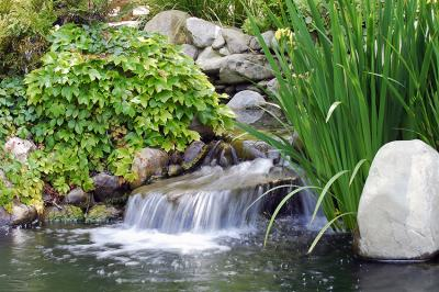 wodospad-kamienie-i-rosliny