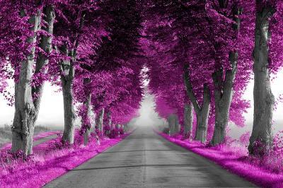 fioletowe-drzewa-i-szara-droga
