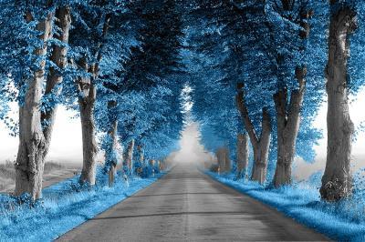 niebieska-aleja-drzew-przy-drodze