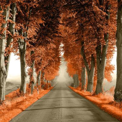 pomaranczowa-aleja-drzew-przy-drodze