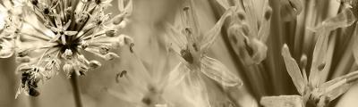 kwiaty-i-pszczola-w-sepii