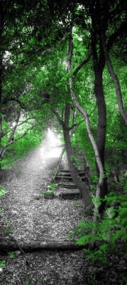 szary-las-i-zielone-drzewa