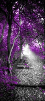fioletowe-drzewa-w-szarym-lesie