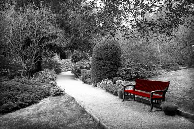 alejka-w-parku-i-samotna-lawka