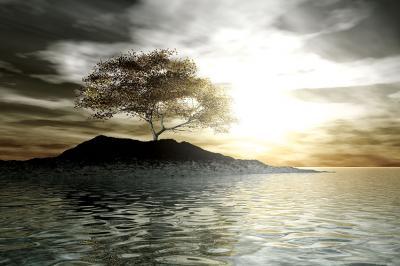 samotne-drzewo-na-bezludnej-wyspie