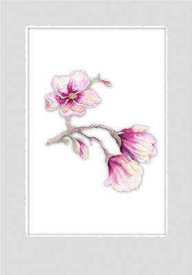 galazka-magnolii