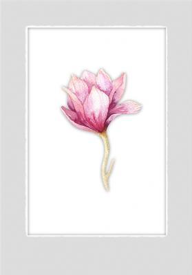 kwiat-magnolii