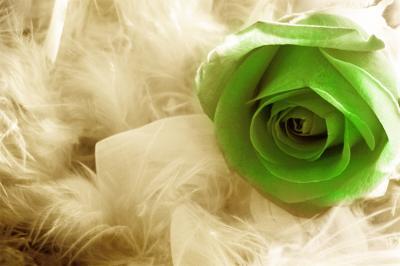 zielona-roza-na-bezowych-piorkach