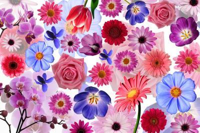 kwiatuszki-na-sciane