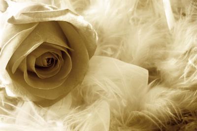 romantyczna-roza-w-sepii