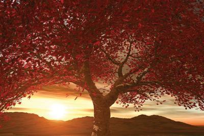 czerwone-drzewo-o-zachodzie-slonca