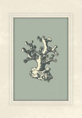 rycina-koralowca