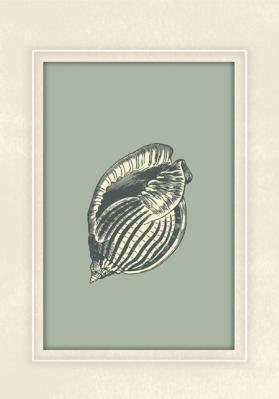 skamieniala-muszla