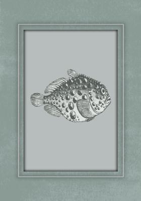 rycina-ryba