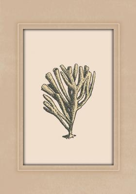 motyw-koralowca