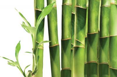 zielone-bambusy