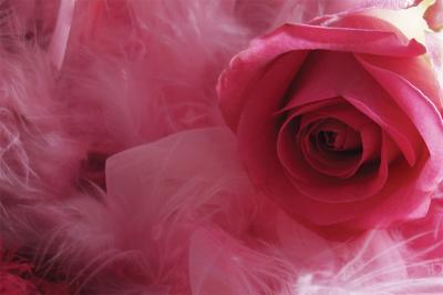 rozowa-roza-na-piorkach