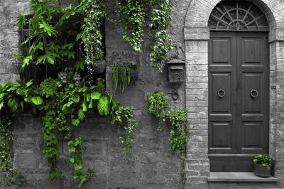 szare-drzwi-i-zielone-rosliny