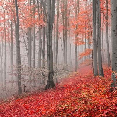 czerwone-drzewa-w-szarym-lesie