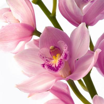 rozowe-kwiaty-na-sciane