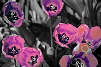 fioletowe-kwiaty-na-szarej-polanie