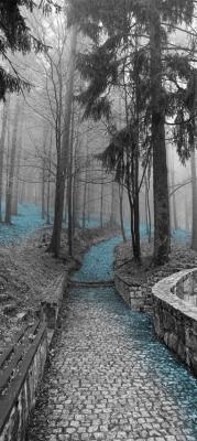 szara-alejka-w-lesie-i-turkusowe-liscie