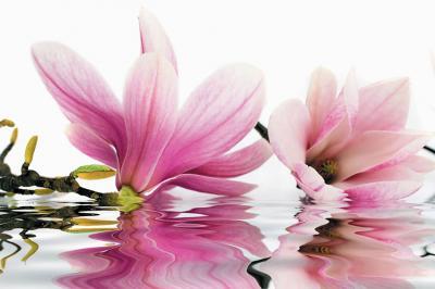 magnolie-w-odbiciu-wody