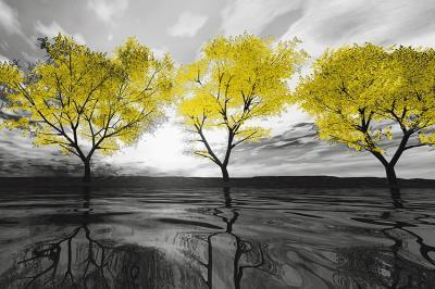 trzy-zolte-drzewa
