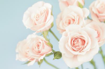 pudrowe-roze
