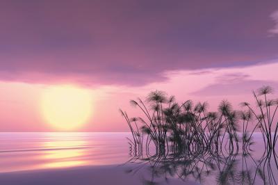 fioletowy-krajobraz