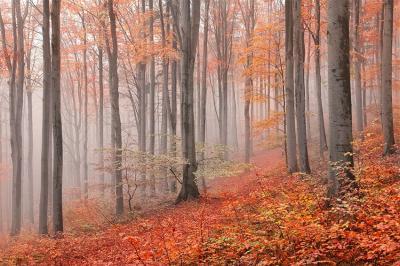 las-jesienia